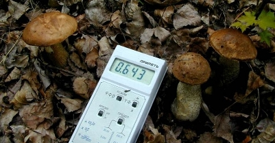 Excessively high levels of cesium-137 found in mushrooms in Homyel region
